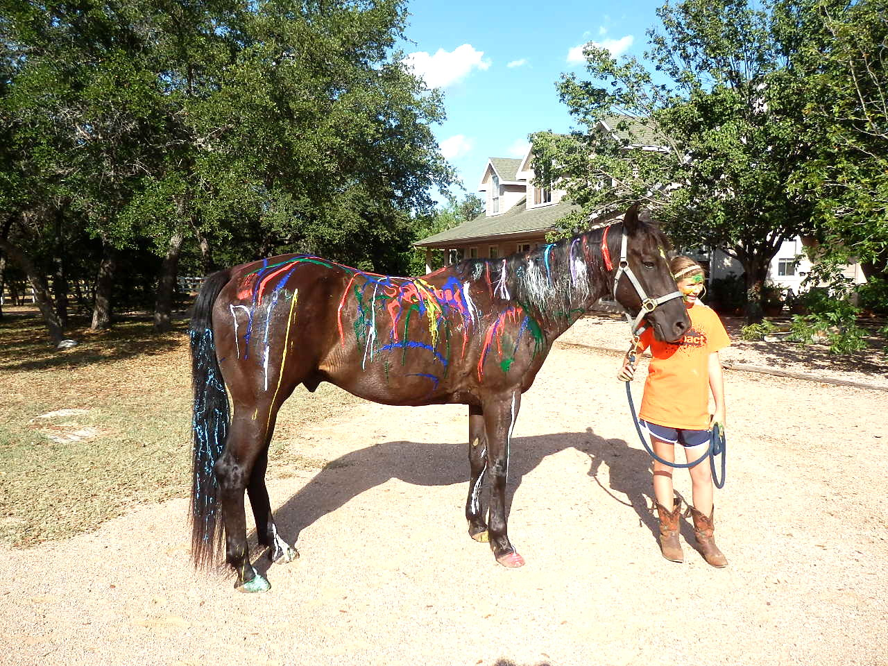 Winner of the Painted Pony contest! Soldier