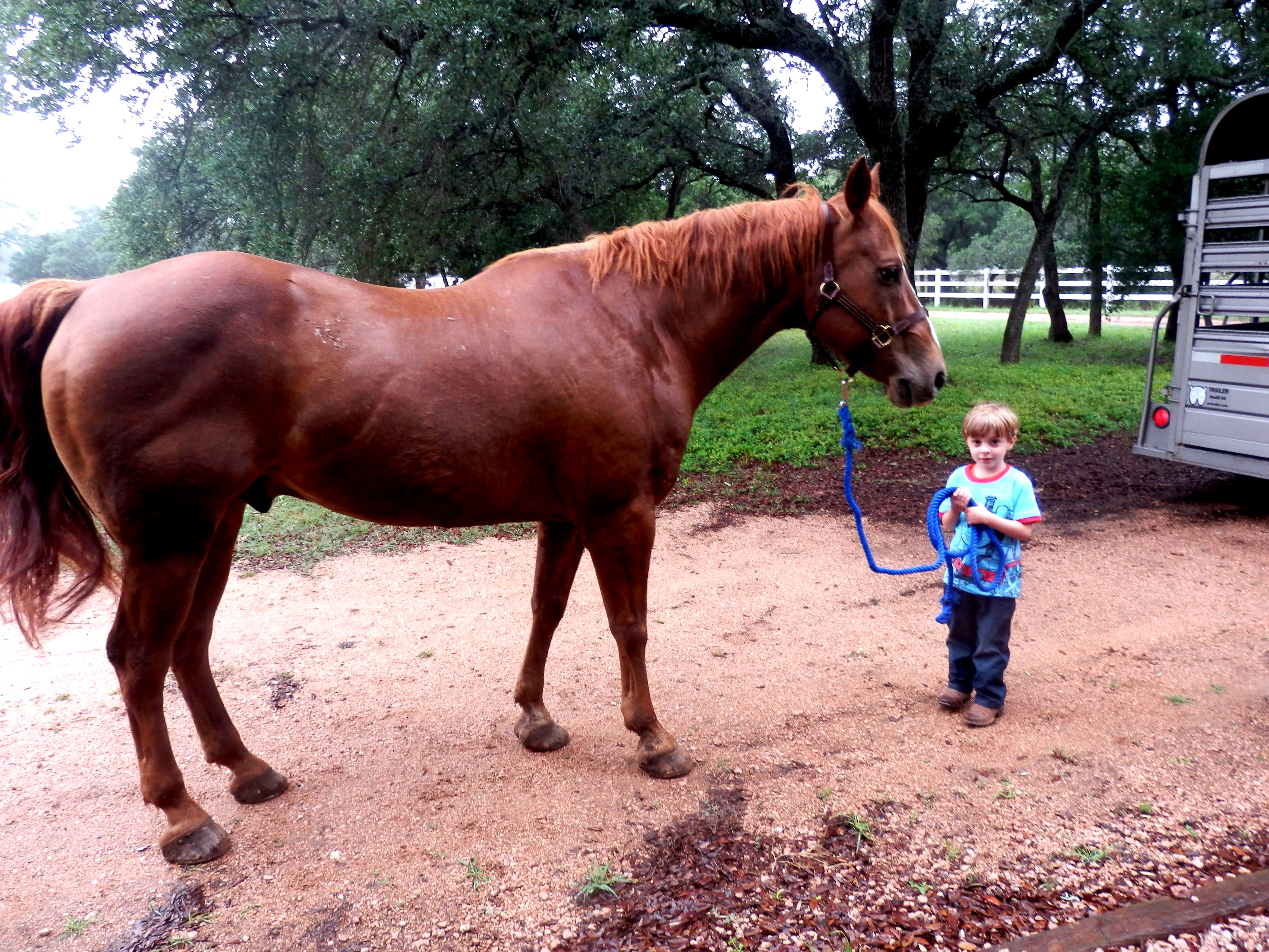 Tonkawood Farms – Safe quality horses for sale!